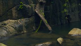 Δύσκολος ποταμός στις τροπικές δασικές μεγάλες πέτρες στον ποταμό βουνών στο άγριο φυσικό τοπίο τροπικών δασών απόθεμα βίντεο