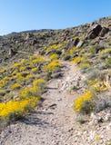 Δύσκολο ίχνος ερήμων που πλαισιώνεται από Καλιφόρνια Brittlebush Στοκ Φωτογραφία