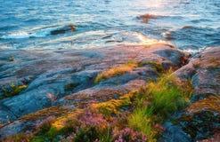 Δύσκολη ακτή με την ανάπτυξη της κινηματογράφησης σε πρώτο πλάνο λουλουδιών Στοκ Φωτογραφία
