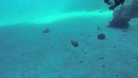 Δύτες και ψάρια απόθεμα βίντεο
