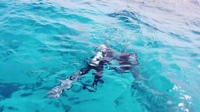 Δύτες στη Ερυθρά Θάλασσα απόθεμα βίντεο