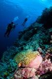 Δύτες, anemone, clownfish, μαλακό κοράλλι σε Banda, υποβρύχια φωτογραφία της Ινδονησίας Στοκ Εικόνες