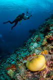 Δύτες, anemone, clownfish, μαλακό κοράλλι σε Banda, υποβρύχια φωτογραφία της Ινδονησίας Στοκ φωτογραφία με δικαίωμα ελεύθερης χρήσης