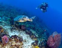 Δύτης και χελώνα Στοκ φωτογραφία με δικαίωμα ελεύθερης χρήσης