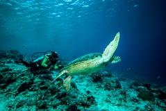 Δύτης και χελώνα πράσινης θάλασσας σε Derawan, Kalimantan, υποβρύχια φωτογραφία της Ινδονησίας Στοκ Εικόνες