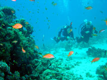 δύτης κοραλλιών Στοκ εικόνες με δικαίωμα ελεύθερης χρήσης