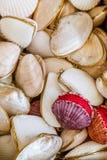 Δώρα από το εξωτικά θαλασσινό κοχύλι και το κοχύλι που συσσωρεύονται από κοινού Στοκ φωτογραφία με δικαίωμα ελεύθερης χρήσης