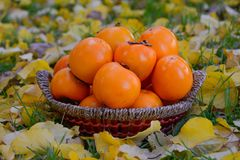 Δώρα της πτώσης - ένα καλάθι με persimmon Στοκ Εικόνες
