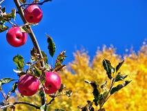 Δώρα του χρυσού ` φθινοπώρου ` στοκ φωτογραφία με δικαίωμα ελεύθερης χρήσης