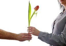 δώρο λουλουδιών όπως μι&alph Στοκ φωτογραφία με δικαίωμα ελεύθερης χρήσης