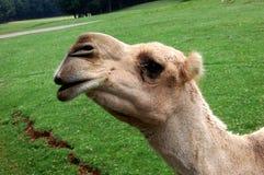 δώστε με φιλά στοκ φωτογραφίες με δικαίωμα ελεύθερης χρήσης