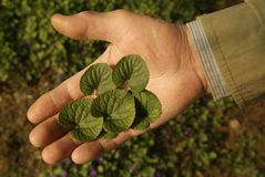 δώστε τα φύλλα του Στοκ Εικόνες