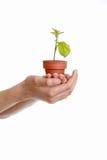 δώστε το φυτό στοκ εικόνες