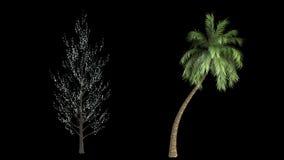 Δώδεκα υψηλά απομονωμένα δέντρα βρόχων διανυσματική απεικόνιση
