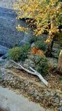 Είδη τιγρών σαρκοφάγων αιλουροειδών θηλαστικών, ζωολογικός κήπος Kyiv στοκ εικόνες με δικαίωμα ελεύθερης χρήσης