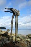 είδωλο Στοκ εικόνα με δικαίωμα ελεύθερης χρήσης