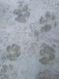 Είναι ίχνος σκυλιών Στοκ Φωτογραφίες