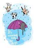 Είναι βρέχοντας κάρτα φθινοπώρου γάτες και σκυλιά Στοκ φωτογραφία με δικαίωμα ελεύθερης χρήσης