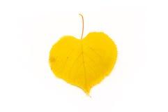 Είναι κίτρινο φύλλο που απομονώνεται στοκ εικόνες