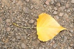 Είναι κίτρινο φύλλο στο χώμα στοκ φωτογραφία με δικαίωμα ελεύθερης χρήσης
