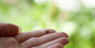 Είναι μικρός αλλά επικίνδυνος στοκ φωτογραφία με δικαίωμα ελεύθερης χρήσης