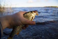Είναι τώρα πιασμένο καλό roach Στοκ φωτογραφία με δικαίωμα ελεύθερης χρήσης