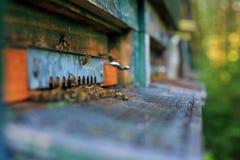 Είσοδος κυψελών στοκ φωτογραφία
