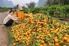 Είδος των πορτοκαλιών, τα οποία είναι δέσμη να βρεθούν στο δρόμο. Στοκ Φωτογραφία