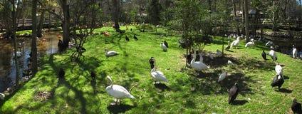 εαρινά υδρόβια πουλιά νησ& Στοκ φωτογραφία με δικαίωμα ελεύθερης χρήσης