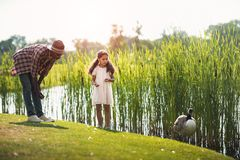 εγγονή αφροαμερικάνων και η ταΐζοντας χήνα παππούδων της στη λίμνη στοκ φωτογραφία