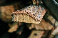 Εγκάρσιο τμήμα ενός δέντρου ζωή αξόνων στοκ φωτογραφία με δικαίωμα ελεύθερης χρήσης