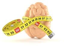 Εγκέφαλος με το εκατοστόμετρο ελεύθερη απεικόνιση δικαιώματος