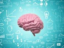 Εγκέφαλος τρισδιάστατος Στοκ Φωτογραφία