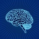 εγκέφαλος Στοκ φωτογραφίες με δικαίωμα ελεύθερης χρήσης