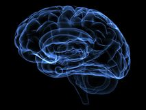 εγκέφαλος ελεύθερη απεικόνιση δικαιώματος