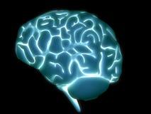 εγκέφαλος Στοκ Φωτογραφίες