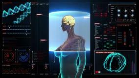 Εγκέφαλος ανίχνευσης στο θηλυκό σώμα στο ταμπλό ψηφιακής επίδειξης των ακτίνων X άποψη διανυσματική απεικόνιση