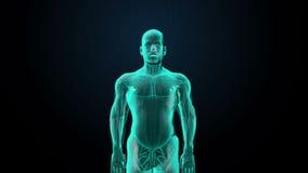 Εγκέφαλος ανίχνευσης στο θηλυκό σώμα των ακτίνων X άποψη ελεύθερη απεικόνιση δικαιώματος