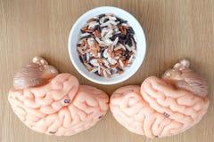 Εγκέφαλος και ρύζι Στοκ Εικόνα