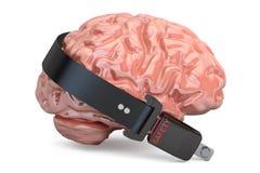 Εγκέφαλος με τη ζώνη ασφαλείας, τρισδιάστατη απόδοση Στοκ Εικόνα