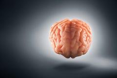 Εγκέφαλος που επιπλέει σε ένα γκρίζες υπόβαθρο/μια έννοια σκέψεων Στοκ φωτογραφίες με δικαίωμα ελεύθερης χρήσης
