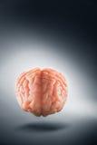 Εγκέφαλος που επιπλέει σε ένα γκρίζες υπόβαθρο/μια έννοια σκέψεων Στοκ φωτογραφία με δικαίωμα ελεύθερης χρήσης