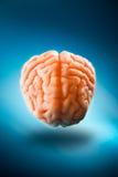 Εγκέφαλος που επιπλέει σε ένα μπλε υπόβαθρο/μια εκλεκτική εστίαση Στοκ Εικόνα