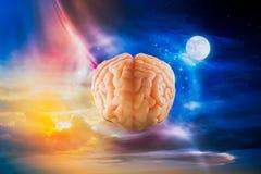 Εγκέφαλος που επιπλέει στον ουρανό/την έννοια σκέψεων Στοκ Εικόνα