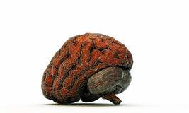 Εγκέφαλος στο κλουβί Στοκ φωτογραφία με δικαίωμα ελεύθερης χρήσης