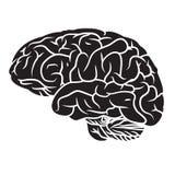 Εγκέφαλος 2 Στοκ φωτογραφία με δικαίωμα ελεύθερης χρήσης