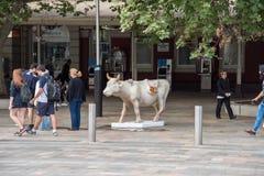 Εγκατάσταση τέχνης αγελάδων στο Περθ Στοκ Εικόνες