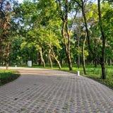 Εγκαταλειμμένη αλέα στο πάρκο με τα αποβαλλόμενα δέντρα στοκ φωτογραφία με δικαίωμα ελεύθερης χρήσης