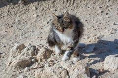 Εγκαταλειμμένη γάτα που φαίνεται κεκλεισμένων των θυρών Άγρια και άστεγη γάτα στην πέτρα Στοκ Εικόνες