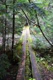 Εγκαταλειμμένη γέφυρα στο δάσος Στοκ Εικόνες